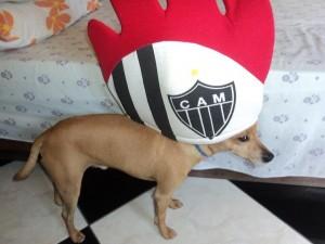 Galo dog